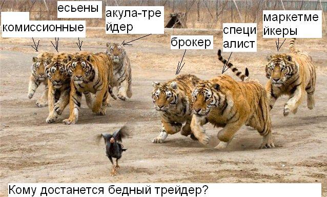 tigr i trader